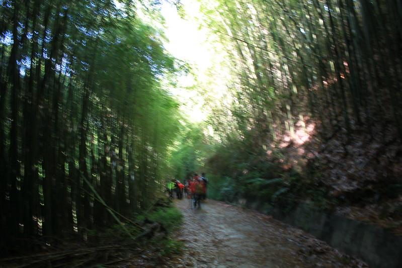 環島-新竹上帝部落-司馬庫斯隨拍 (38)