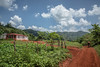Valle de Vinales, Pinar del Rio , Cuba_-49 by raf hérédia