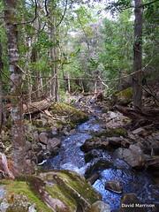 Cygnet River