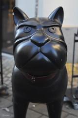 Copenhagen (Denmark) - Angry Puppy