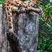 Clouded leopard napping