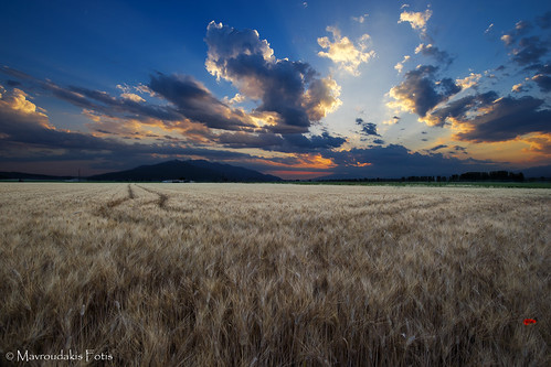blue light sunset summer sky urban food orange cloud sun sunlight plant color nature beautiful field grass yellow vertical rural sunrise season landscape outdoors gold dawn spring stem corn shiny bright image background wheat cereal meadow seed straw dry nobody scene illuminated greece growth macedonia land agriculture non sunbeam cloudscape timeless makedonia μακεδονια macedoniagreece