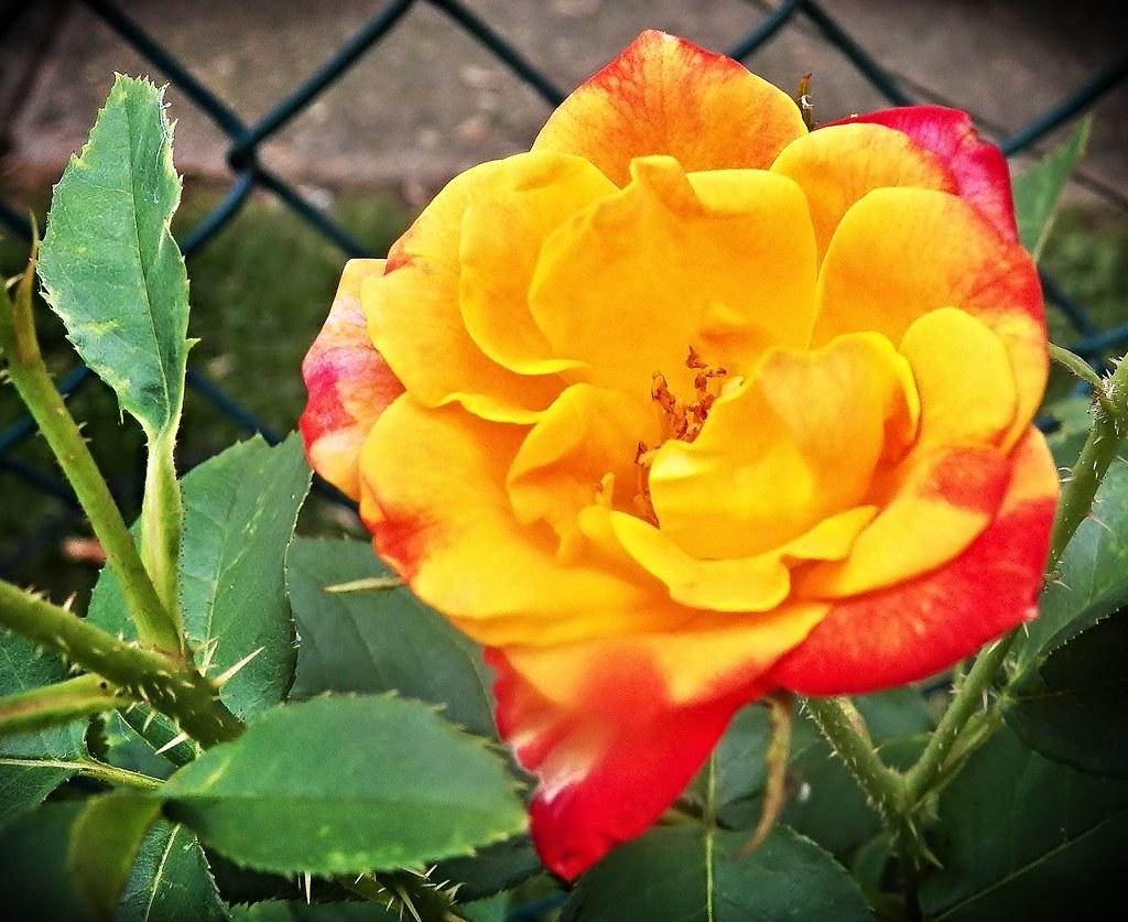 Come close-my petals are soft and I smell so good!