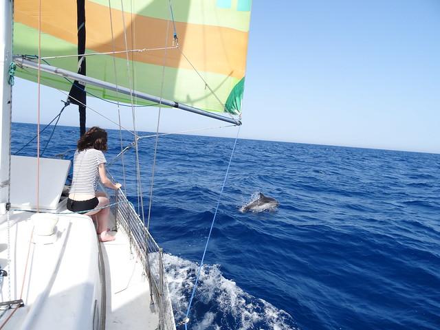 dauphins départ BCN