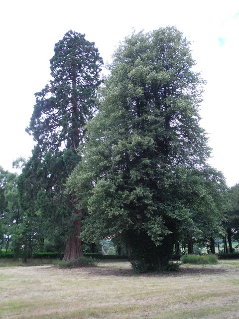 Trees in Wardour Park