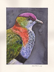 Fruit dove finished