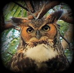 Owl T-shirt photos
