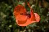 Un bichito en la flor