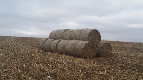 Bales on land