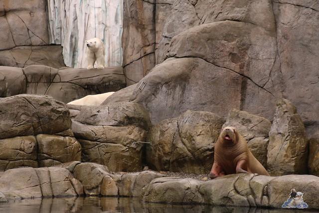 Tierpark Hagenbeck 25.07.2015 057
