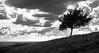 Tree by graemes83
