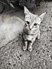 Nino, the cat