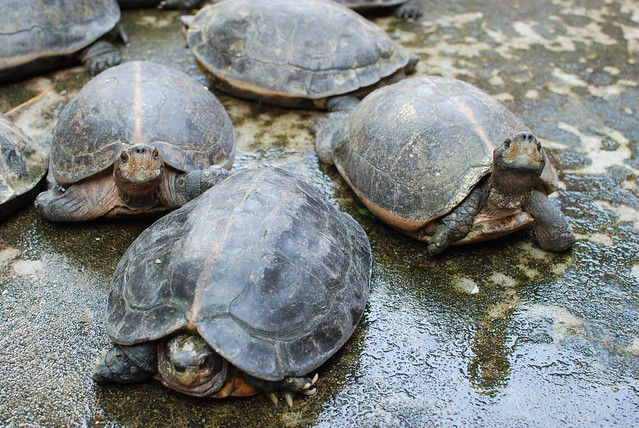 Bye tortoises! Till we meet again!