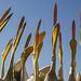 Pelican choir in Ethiopia by Bertrand Linet