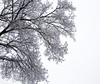 first snow-013