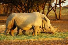 DSC09809 - NAMIBIA 2013