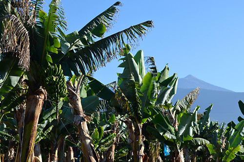 Bananas and Mount Teide, Tenerife