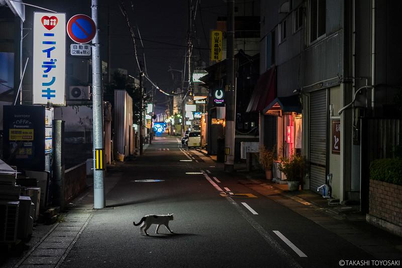 Tokushima Cat Color #234