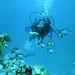 moreFish4022 by woildee