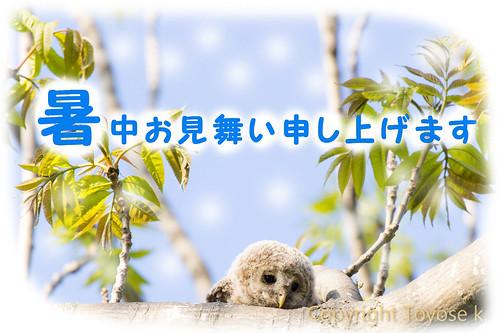 _D4S0267-1暑中お見舞い2015