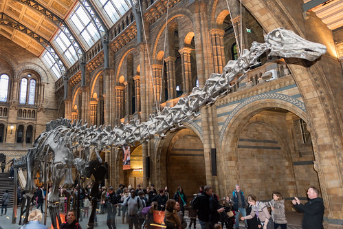 Diploducus dinsosaur London