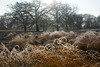 Frosty Bushy Park