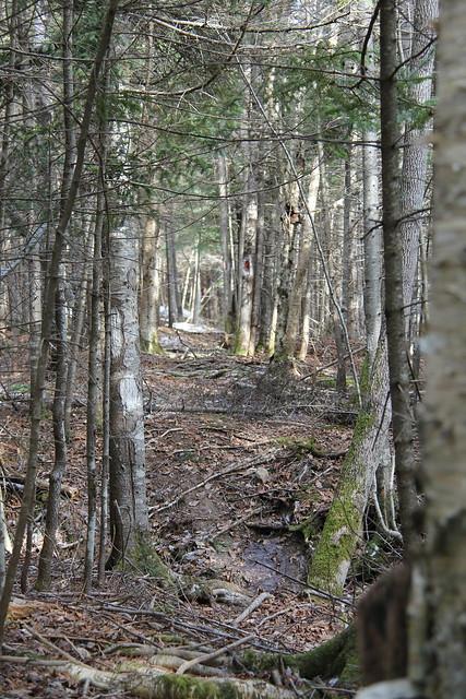 Property Trail