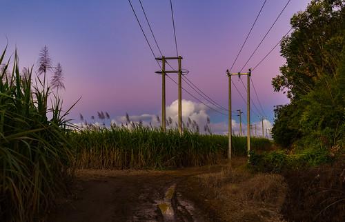 sugarcane rum mauritius sunset purple sky clouds fields trees brown blue