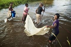 Zambian women fishing with net, Limulunga, Barotseland, Zambia