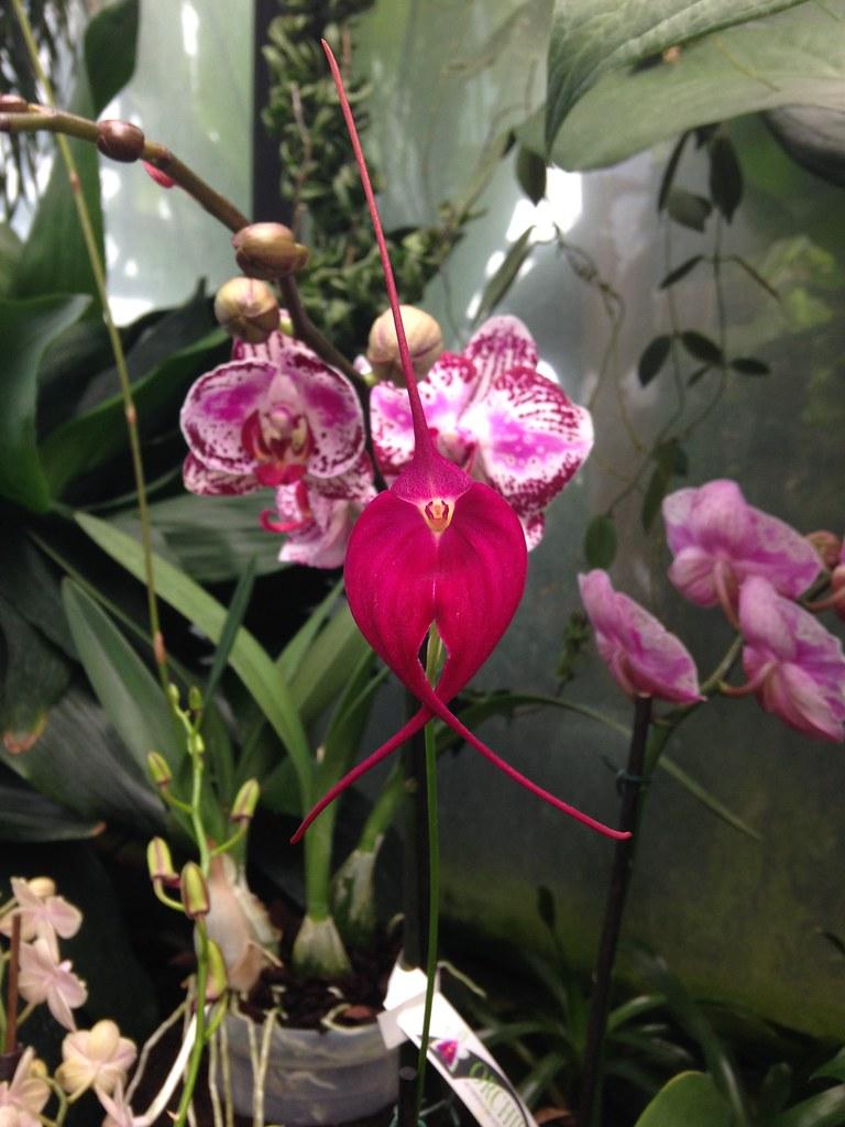 Orchidarium de Prangins 18686277383_db9484e5fe_b