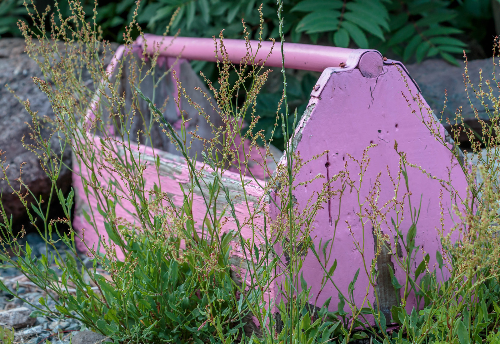 pink toolbox in the weeds