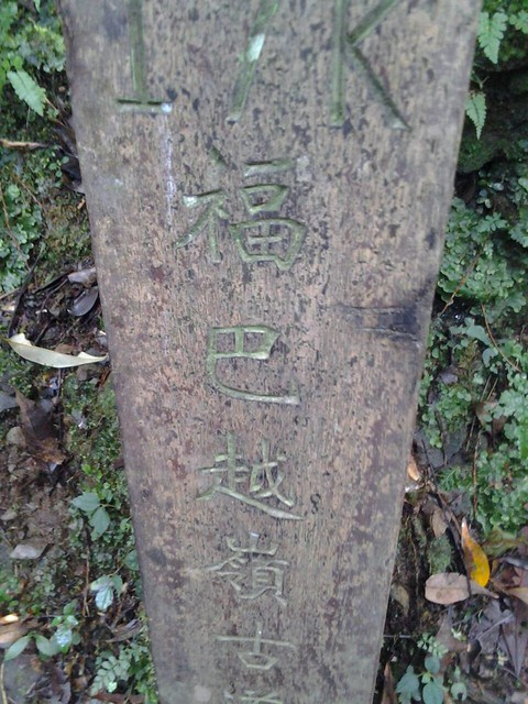 16056拉拉山巨木群