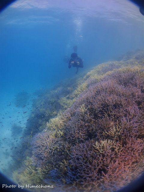 〆は青いサンゴ礁で♪