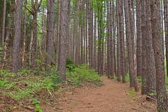Cranesville Swamp Pine Trail