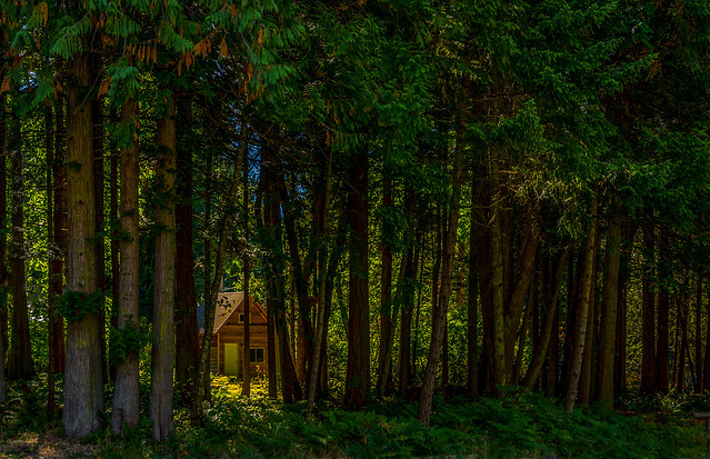 The House in the Woods, Point Roberts, WA