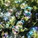 Bubble Rain by jurvetson