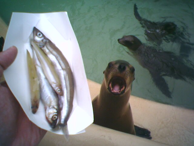 Fresh fish at Sea World