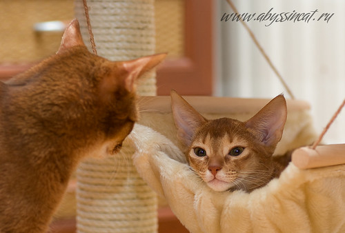 Abyssinian Lullaby... by Abysphere