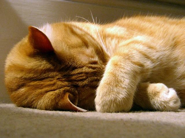 Puck - nap guru