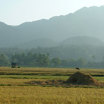 rice paddy in aklan