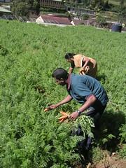 flower(0.0), garden(0.0), grass(0.0), lawn(0.0), agriculture(1.0), shrub(1.0), farm(1.0), field(1.0), soil(1.0), tree(1.0), plant(1.0), gardener(1.0), produce(1.0), farmworker(1.0), crop(1.0), plantation(1.0),
