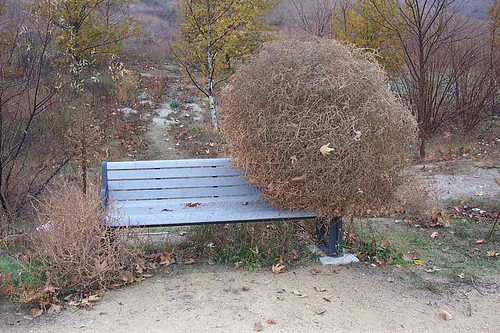 Tumbleweed on a Bench