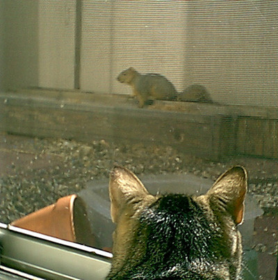 amenti vs. squirrel
