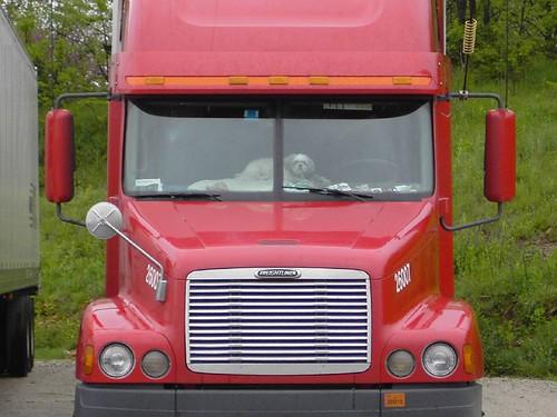 Trucker Dog