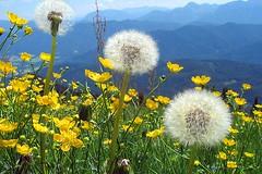 Flowers - German Wild Flowers