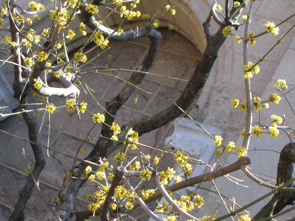 spring settles in