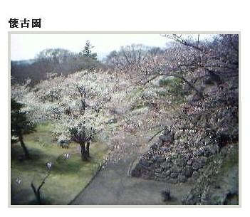 日本懷古園櫻花盛開