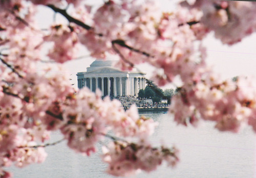 Change of Focus, Washington's Cherry Blossoms