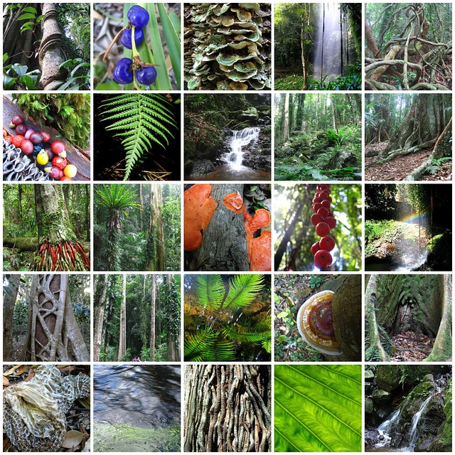 amazon rainforest plants collage. in the rainforest peacock plant amazon plants collage o