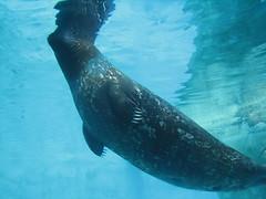 Albuqurque Zoo and Aquarium
